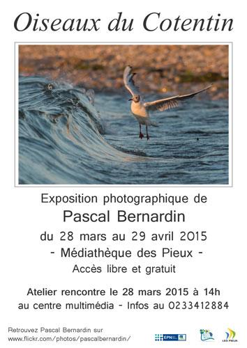 Affiche exposition Oiseaux en Cotentin Pascal Bernardin